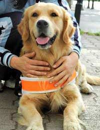 Eurostar Europe Assistance Dog Dogs For
