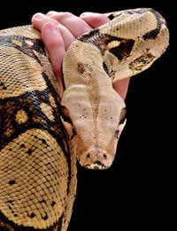 Snakes Move Home Vivarium Salmonella